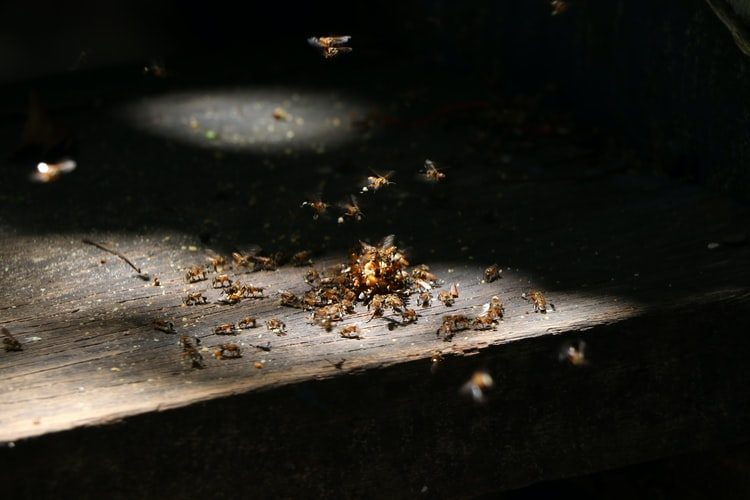 You Should Know About Pest Inspections
